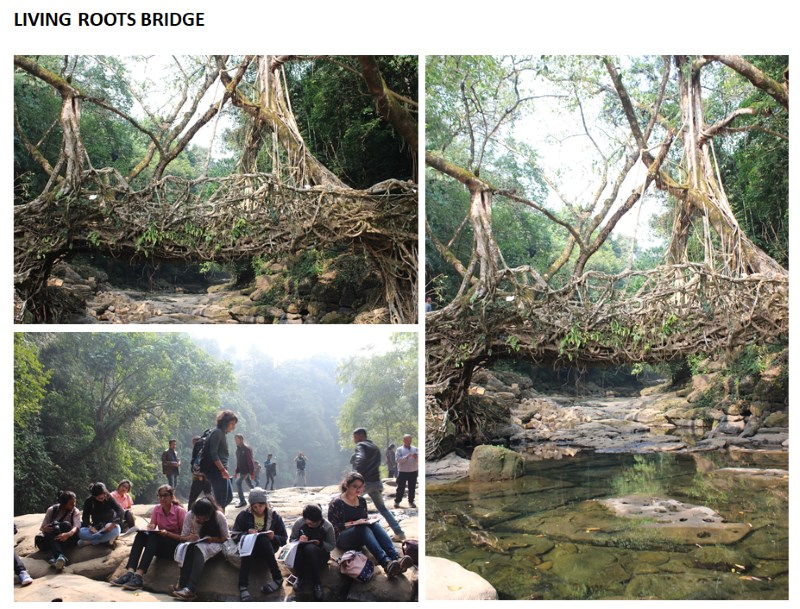 living-roots-bridge